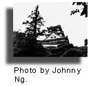 Small Johnny Ng photo