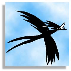 The Drongo Bird drawing by Leon Sun