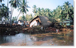 Impact of the tsunami on coastal areas of Tamil Nadu