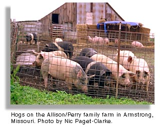 Hogs, Armstrong, Missouri