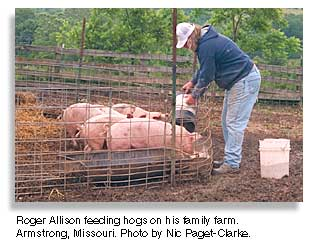 Roger Allison feeding hogs in his farm. Photo by Nic Paget-Clarke.